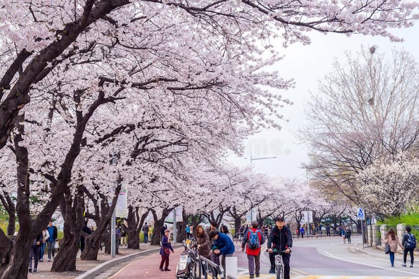 Tham quan Yeouido - thủ đô Seoul