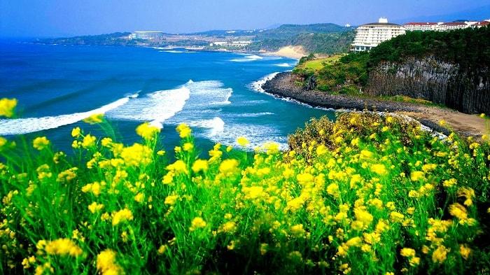 Du lịch Hàn Quốc tham quan đảo Jeju