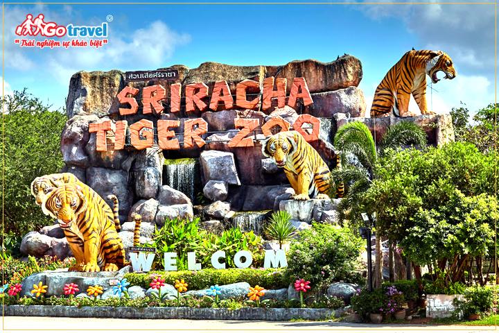 du lịch Thái Lan tham quan vườn thú Sriracha Tiger Zoo