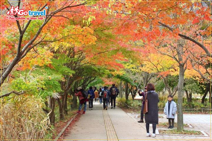 Du lịch Hàn Quốc tháng 10